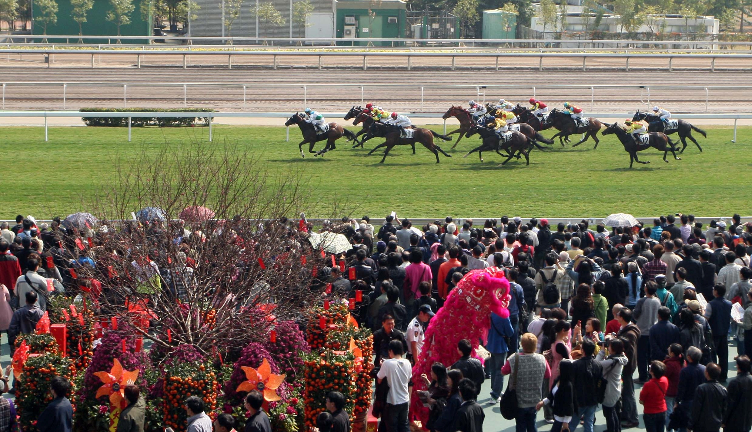 Hong Kong Chinese New Year Race Day